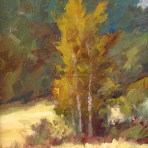 Greenhill Cottonwoods study